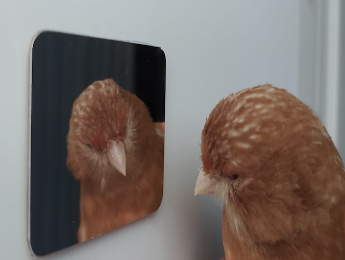 Espejo Ornilook Bird Magnético
